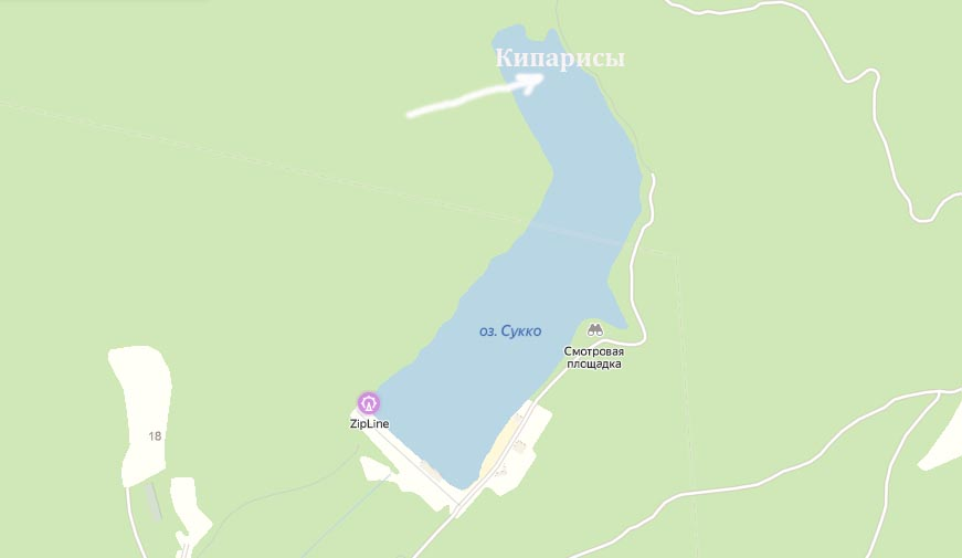 кипарисы в озере
