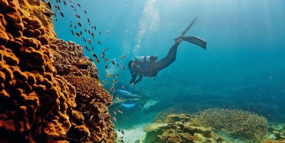 погружение в барьерный риф