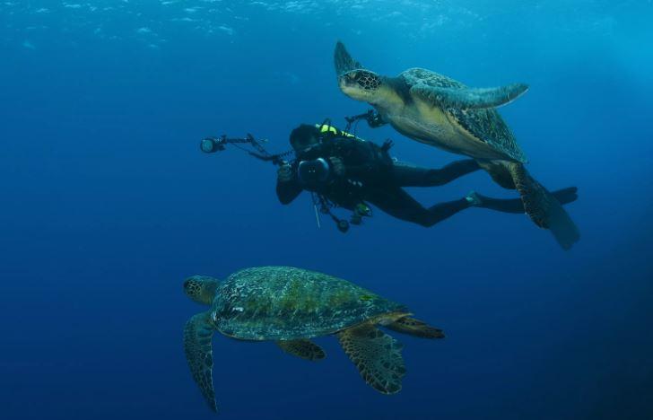 погружение с аквалангом на кокосовом острове